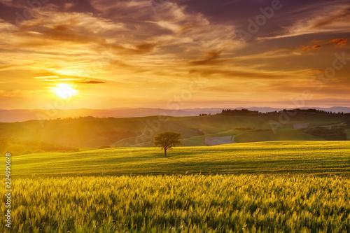 Idyllic view, foggy Tuscan hills in light of the rising sun