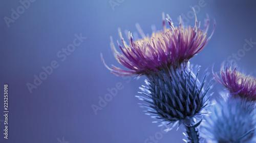 Valokuva Floral blue-purple background