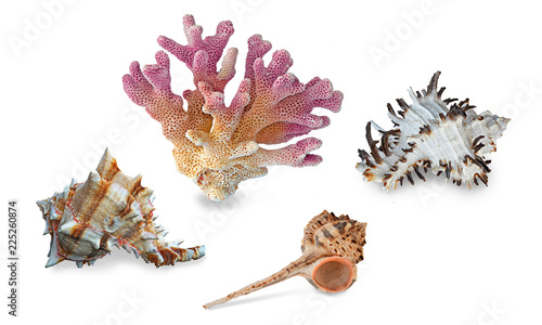 A  coral and seashells isolated on  background