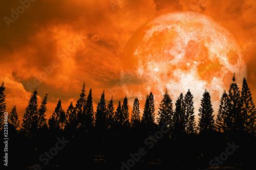 super orange moon back silhouette high pine in dark red orange night sky