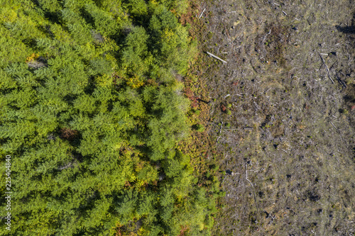 Aerial drone view of deforestation of a pine forest