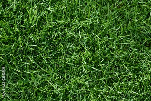 Fototapeta Clean green grass