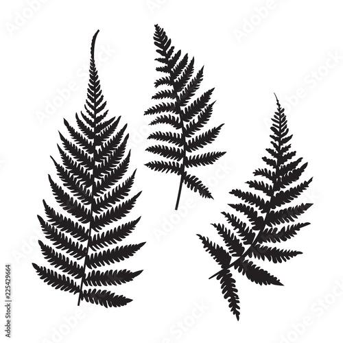Obraz na plátně Vector fern silhouette collection