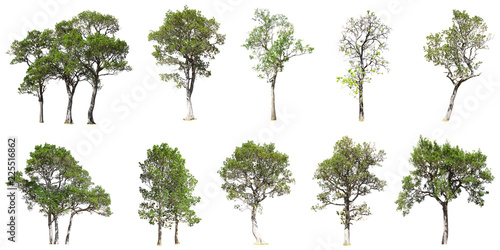 Carta da parati Collection of tree isolated on white background