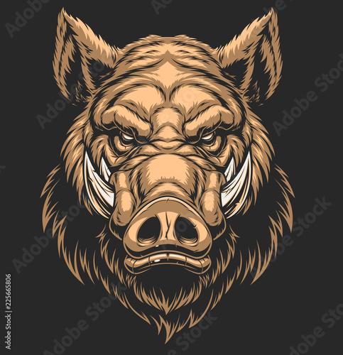 Fototapeta Head ferocious boar