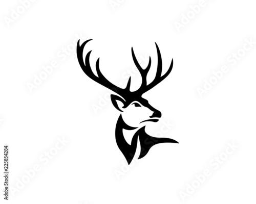 Fotografia buck 4
