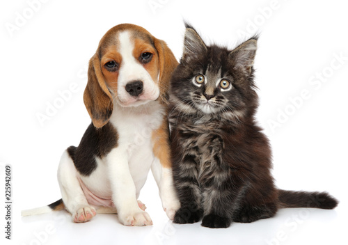 Puppy and kitten on a white background Fotobehang