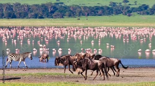 Leinwand Poster Wildebeests in the Ngorongoro Crater, Tanzania