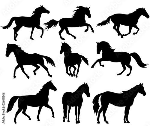 Photo silhouette horse running, collection