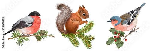 Fényképezés Winter animals set with birds and squirrel