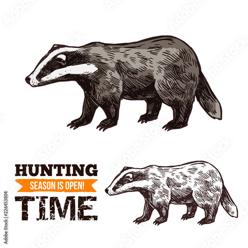 Fotografija Vector sketch of badger wild animal
