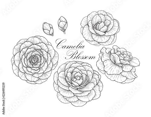 Cuadros en Lienzo Camelia blossom set2