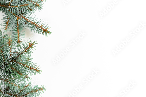 Border frame made from conifer tree branches on a white background Fototapeta