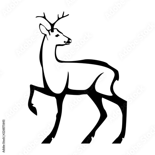 Fotografija Roe deer with small horns