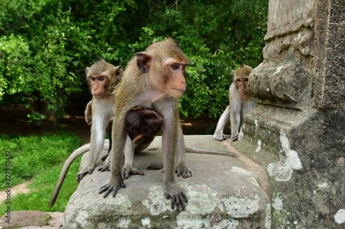 Fototapeta premium Siem Reap; Królestwo Kambodży - 23 sierpnia 2018: Świątynia Angkor Wat