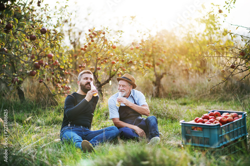 Fotomural A senior man with adult son drinking cider in apple orchard in autumn