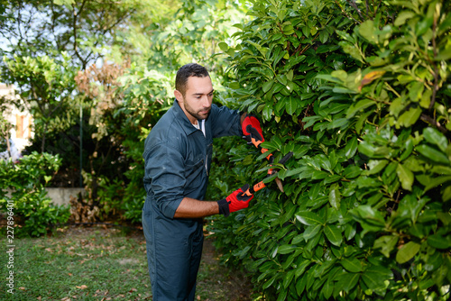 Valokuva handsome young man gardener trimming hedgerow in a garden park outdoor