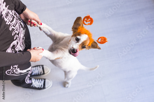 Fototapeta top view of a young woman with her cute small dog wearing a pumpkin diadem