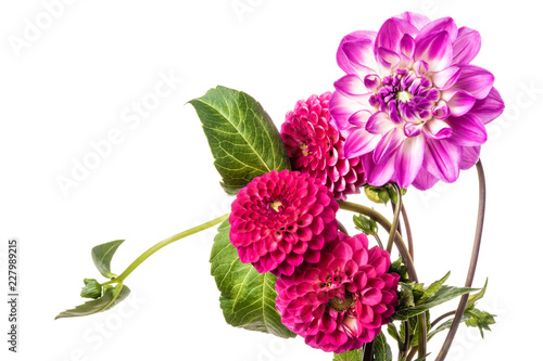 Beautiful colorful arrangement dahlia flowers isolated on a white background Fototapet