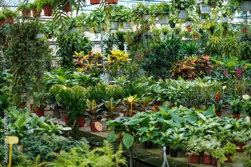 Fotografia Flowers and plants for sale inside a greenhouse   -