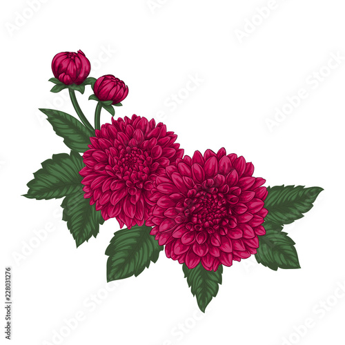Fotomural beautiful bouquet dahlias with the effect of a watercolor drawing isolated on background