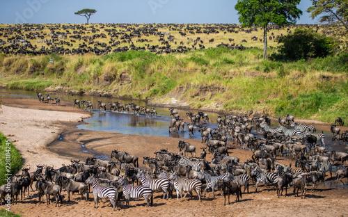 Big herd of wildebeest in the savannah. Great Migration. Kenya. Tanzania. Maasai Mara National Park. An excellent illustration.