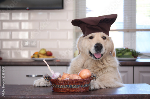 Golden retriever with willow basket with onions and garlics.