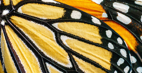 Stampa su Tela Monarch