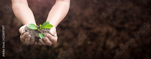 Photo World environment day concept: Human hands holding seed tree with soil on blurre