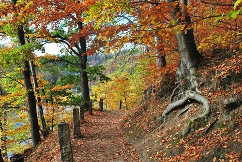 Fototapeta premium Pejzaż jesienny