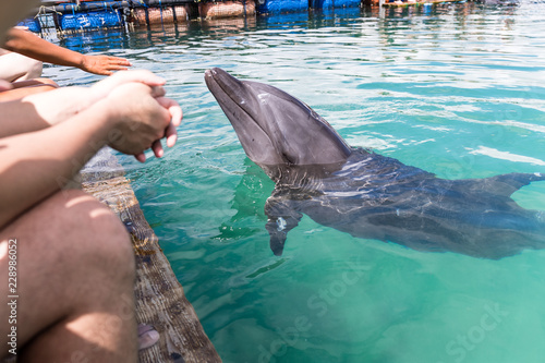 Dolphins wait for food