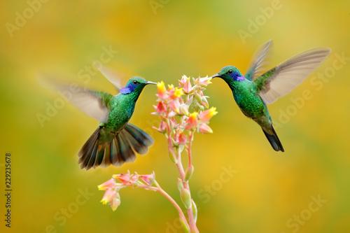 Fotografia Two birds with orange flower