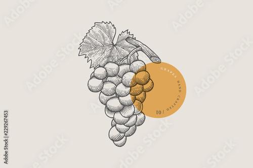 Obraz kiści winogron w stylu grawerowania na jasnym tle. Ilustracji wektorowych.