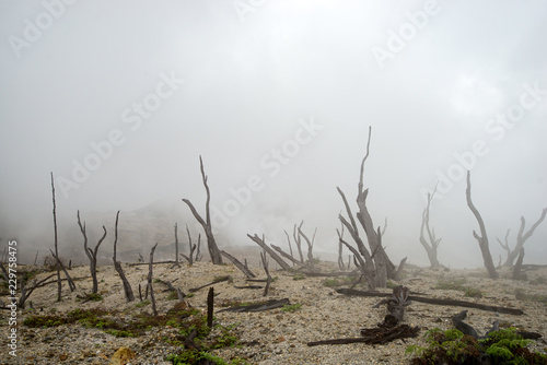 Murais de parede landscape of natural elements, burnt forest in fog and smoke