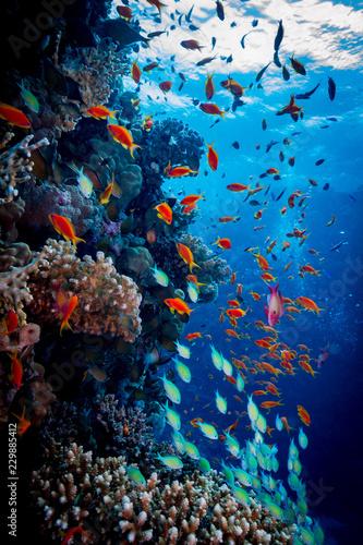 Carta da parati Colorful Reef