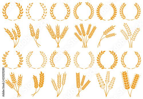 Obraz na plátně Wheat or barley ears