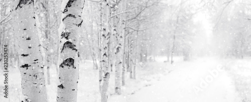 Photo Winter landscape with snowy birch trees in the park
