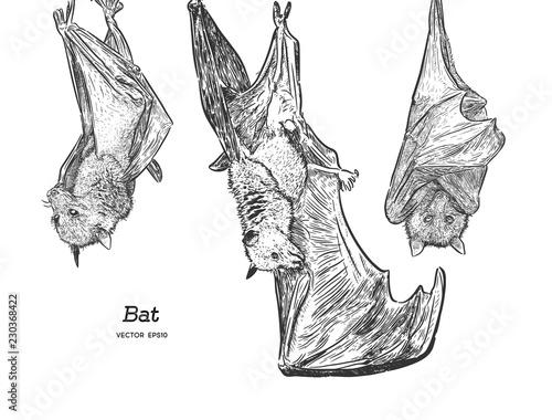 Leinwand Poster Bat illustration, drawing, engraving, ink, line art, vector