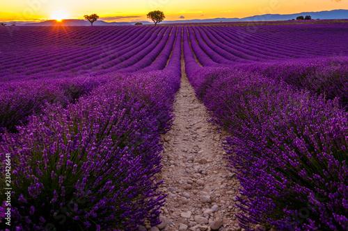 Fototapeta premium Lawendowe pole w rozkwicie, zachód słońca. Plateau de Valensole, Prowansja, Francja.