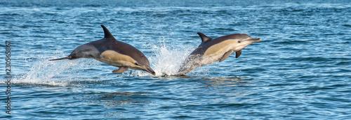 Dolphins in the ocean Fotobehang