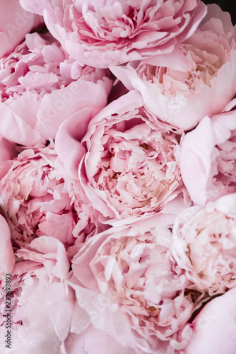 Fotografia Beautiful aromatic fresh blossoming tender pink peonies texture, close up view