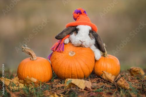 Fototapeta premium Mały królik ubrany w dzianinową czapkę i szalik z dyniami