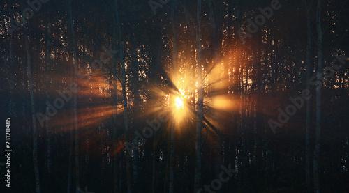 Slika na platnu Sunrise behind a coppice
