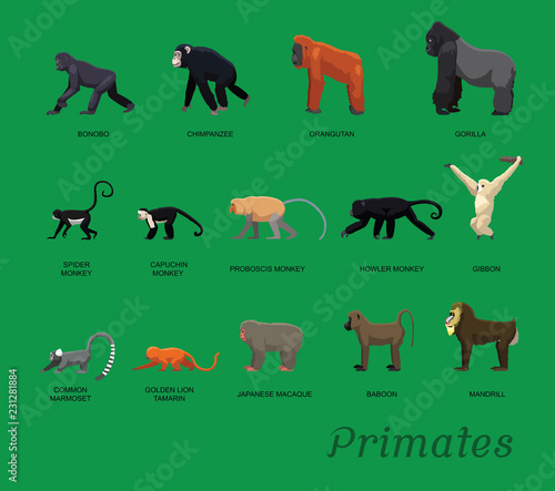 Valokuva Primate Species Set Cartoon Vector Illustration