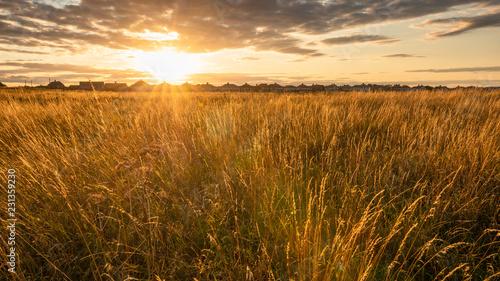 Obraz na płótnie Field of Grass backlit by the Evening Sunlight