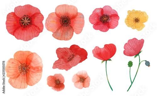 Fotografie, Obraz wild flowers poppy watercolor pattern illustration seamless
