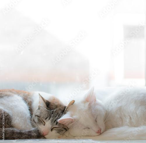 Wallpaper Mural two cute sleeping cat cuddling together
