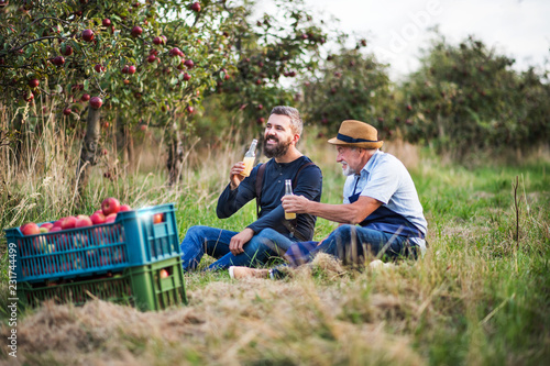 Leinwand Poster A senior man with adult son drinking cider in apple orchard in autumn