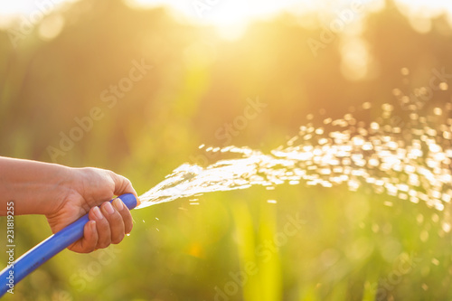 Fotografia Hand holding water hose and watering to the plant in outdoor garden