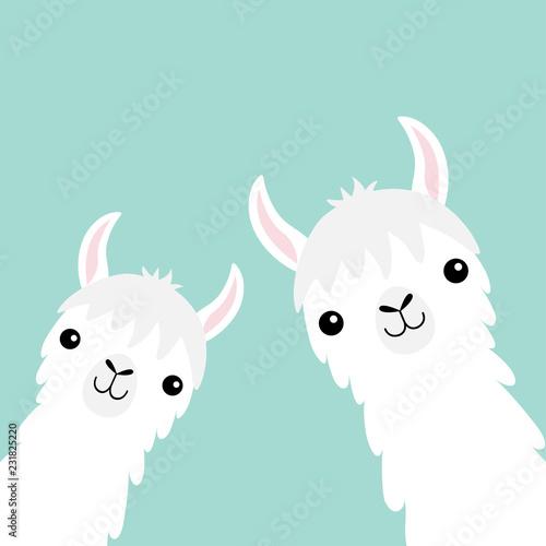 Canvas Print Two llama alpaca animal set